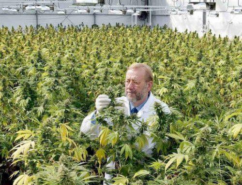 La ONU reconoce propiedades medicinales del cannabis y la retira de categoría de drogas más peligrosas